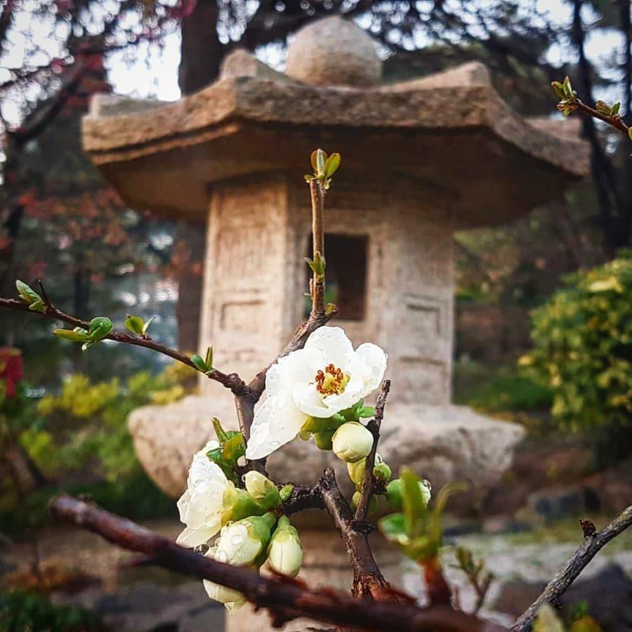 il giardino giapponese1